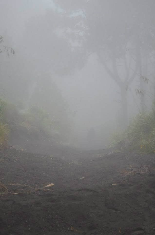 the cloud forest hiking up Acatenango Volcano