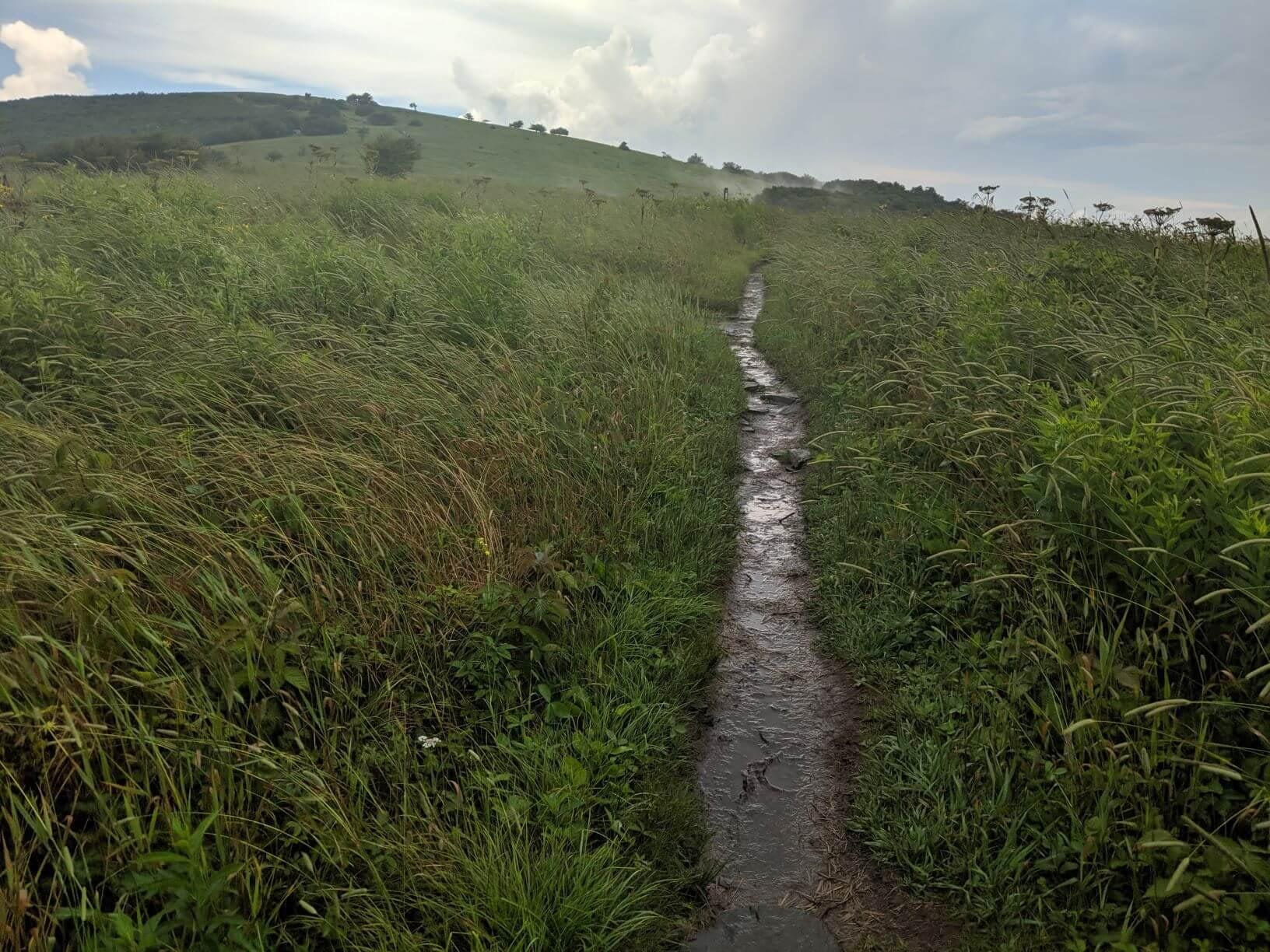 The Appalachian Trail through the Roan Highlands