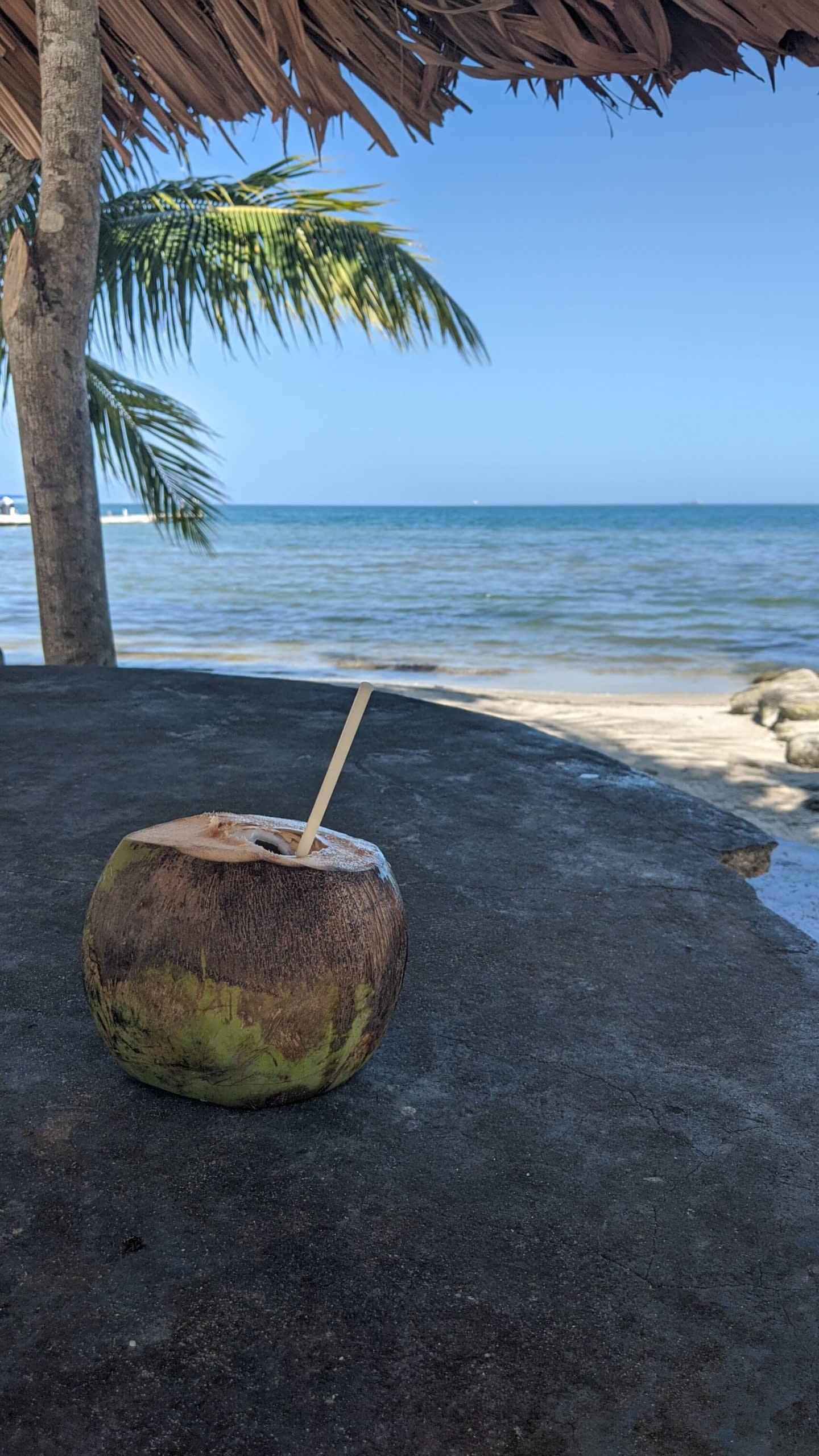 A coconut water in front of a beach scene
