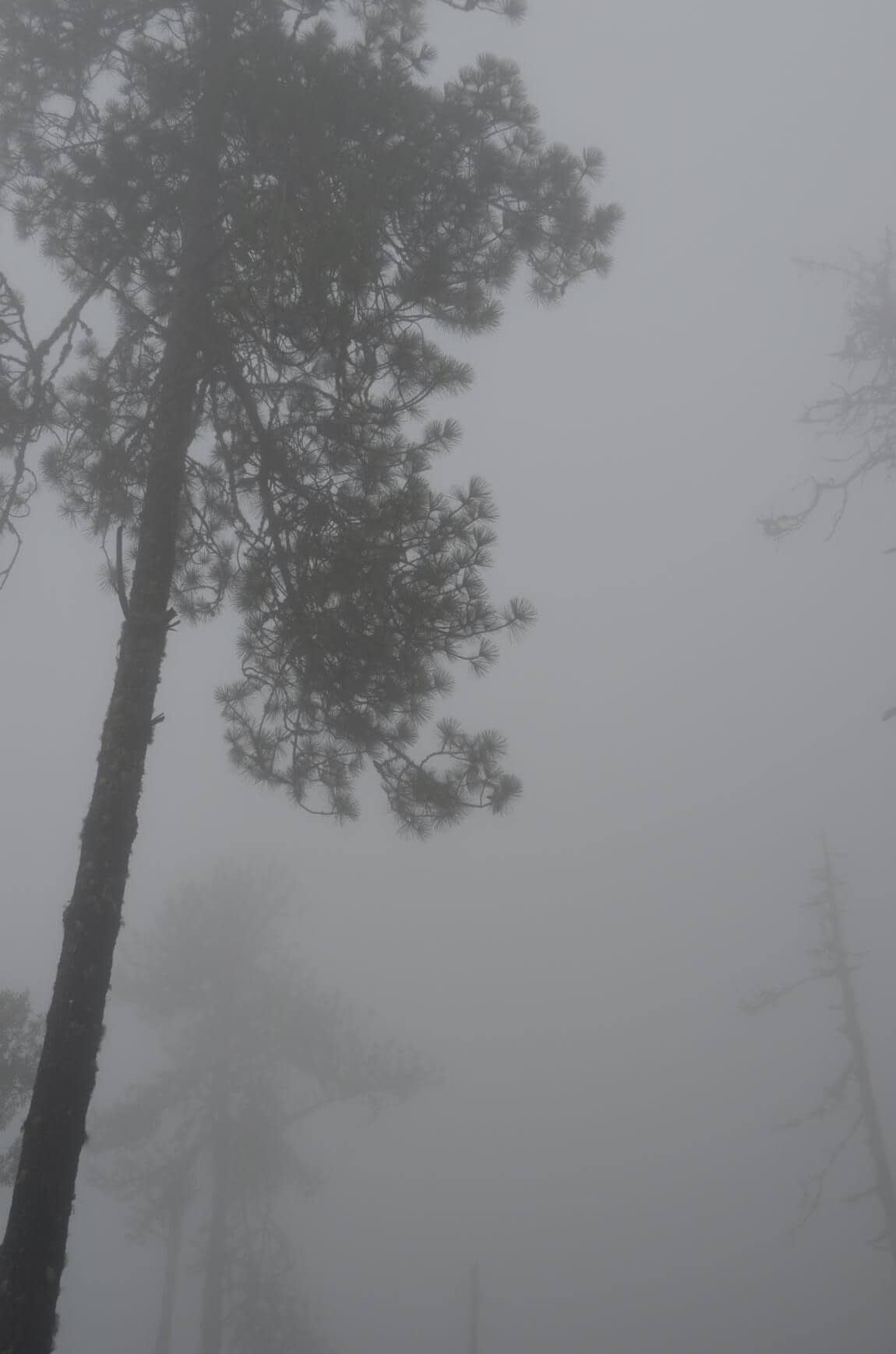 the fog at the top of acatenango volcano